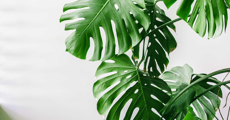 jungle borduren