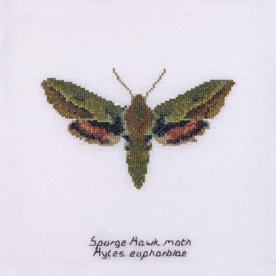 Thea Gouverneur borduurpakket mot spurge hawk moth